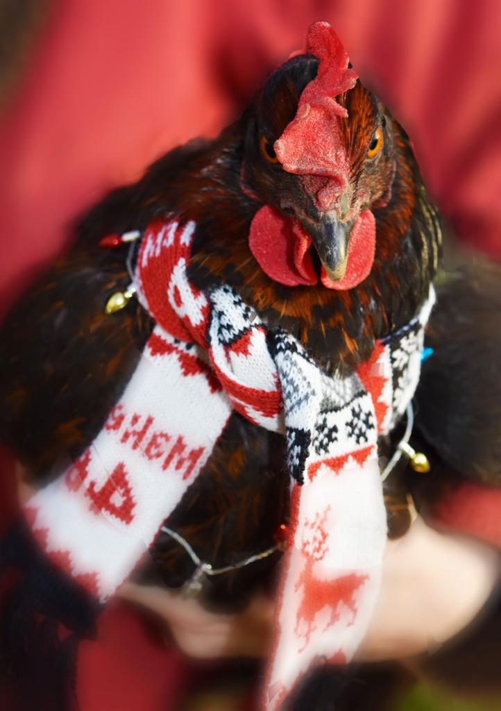 christmas chicken 2