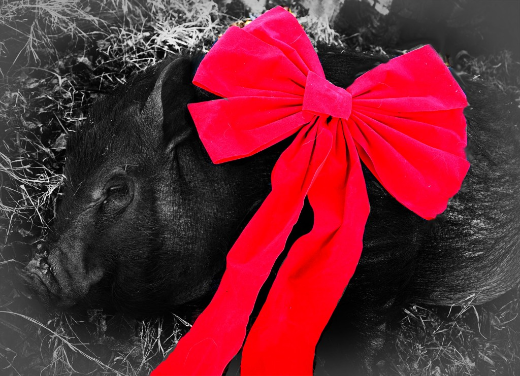 CHRISTMAS PIG 1